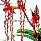 100 Exotischer Orchideensamen properties: rot hängende Blüten weltweit seltene Wasser Schmettlings Orchidee
