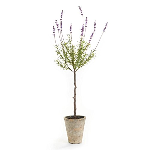 CONSERVATORY FRENCH LAVENDER TOPIARY POTTED HERB - Lavender Topiary