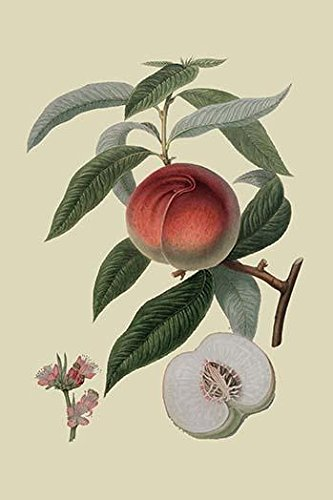 Galande Peach vintage art reproduction by Buyenlarge One of many rare and wonderful images brought forward in time I hope they bring you pleasure each and every time you look at them