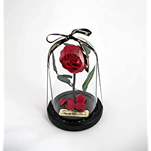 Rose in Glass Dome with Metal Engraved Plaque inspired by Beauty and the Beast Rose, Real Preserved Red Rose in Large Glass Dome with LED lights 3
