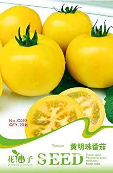 1 Business sasha Yellow Pearl Tomato Seeds with 20 Infinite Growth Types with Strong Cold and Heat Tolerance Growth Potential Sugar and Sweet