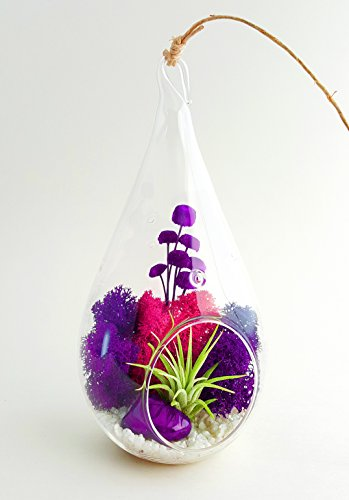 Bliss Gardens Terrarium Flowers Teardrop product image