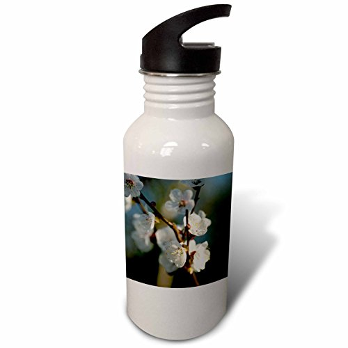 3dRose Alexis Photography - Flowers Sakura Beautiful - White Japanese apricot flowers in the evening light. Charming view - Flip Straw 21oz Water Bottle (wb_286622_2) by 3dRose