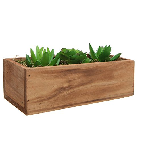 Succulent Plants Decorative Windowsill Container