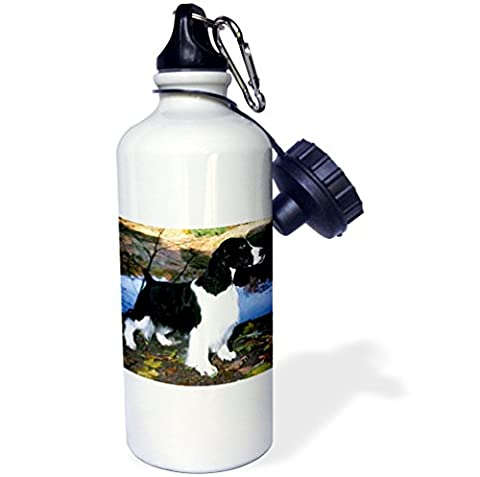 3dRose wb_949_1 Black and White Springer Spaniel Sports Water Bottle, 21 oz, White