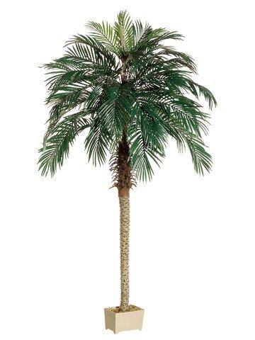 7' Phoenix Palm Tree in Rectangular Plastic Pot Green by Silk Decor