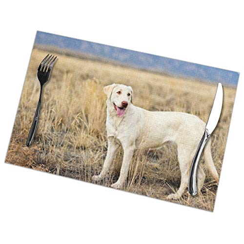 Affany Placemats for Dining Table, Heat Insulation Stain Resistant Table Mat Set of 6 Non Slip Washable Tray Mat Durable Place Mats for Kitchen Dining Room Table Decoration - Labrador Dog -