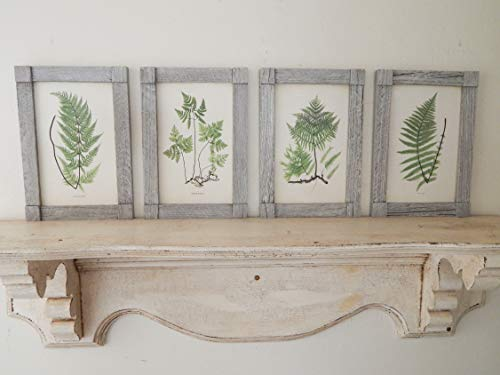 Antique Botanical Fern Prints Set of Four vintage botanical prints, botanical prints, farmhouse decor, salvaged barn wood frame ()