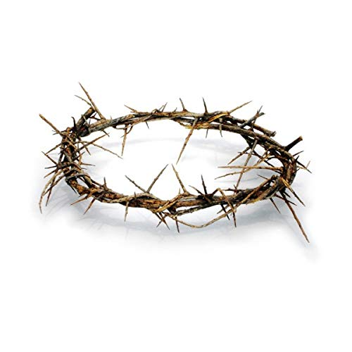 Bethlehem Gifts TM Authentic Jesus Biblical Crown of Thorns from The Holy Land (7-8