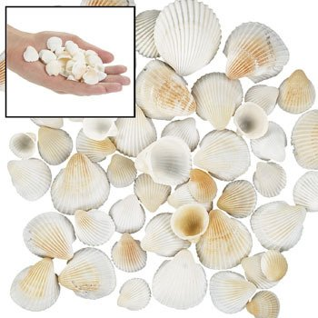 One Pound Box Natural Clamrose Seashells (1/2