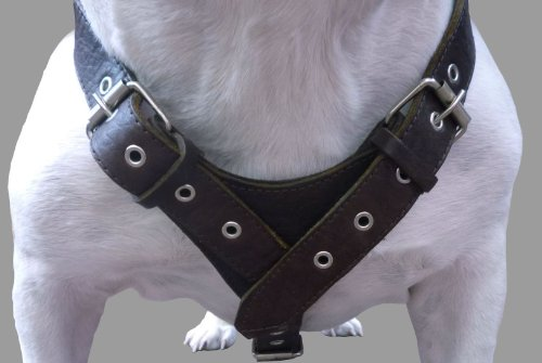 10 Lbs Brown Genuine Leather Weighted Pulling Dog Harness for Exercise and Training. Fits 35''-44'' Chest by Dogs My Love (Image #2)