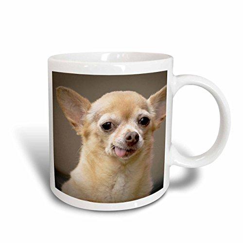 3dRose Toothless Chihuahua Dog, Santa Fe, New Mexico, Ceramic Mug, - Outlet New Santa Mexico Fe
