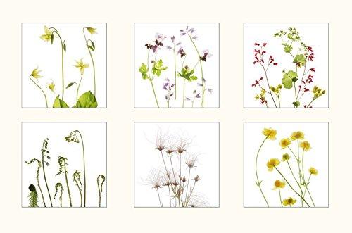 Amazon.com Wildflower Botanical Print Set, Six Wild Flower