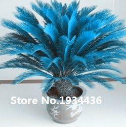 Sago Palm Tree Hot Sale!! Rare Blue Cycas seeds bonsai flower the budding rate 98/% potted plant for home garden 100pcs// bag