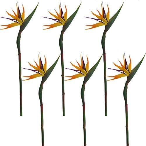 (Lily Garden Pack of 6 Bird of Paradise Spray Natural (Orange, 22.5)