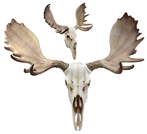 (Ebros Czar North American Bull Moose Skull Wall Decor 22