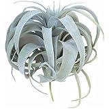 カルナック(Carnac) 人工観葉植物 グリーン サイズ:約本体/縦28×横28×高さ26cm、葉長/10~40cm程/茎(持ち手)6cm