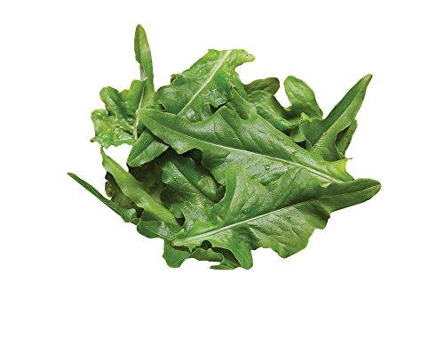 Seed Burpee Lettuce (Burpee Oak Leaf Lettuce Seeds 1000 seeds)