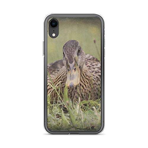 iPhone XR Case Anti-Scratch Creature Animal Transparent Cases Cover Duck On Lake Animals Fauna Crystal Clear (Best Rustic Campgrounds In Michigan)