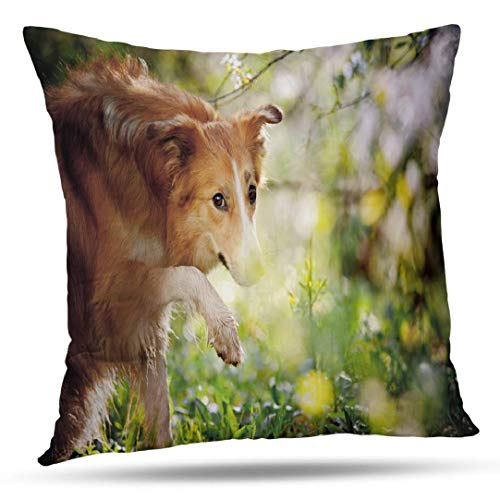 (WAYATO Pillow Case Cotton and Polyester Blend Throw Pillow Covers Shetland Sheepdog Art Gifts Bed Home Decor Cushion Cover 18X18 Inch)