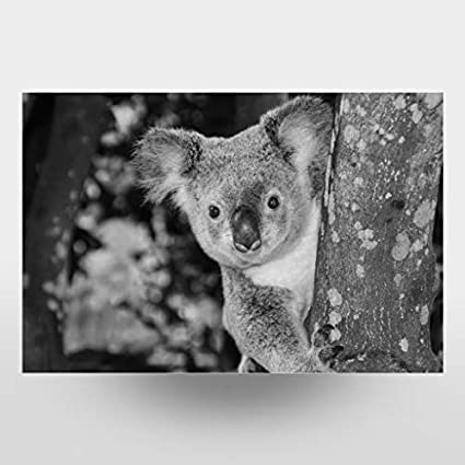 Bild Koala koalab/är Tier artboxONE Poster 30x20 cm Natur Neugieriger Kuala B/är im Baum