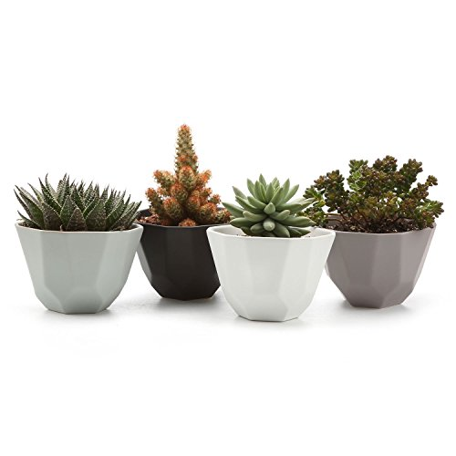 JynXos 5 Inch Ceramic Geometric Pattern Semi Luster Surface Set succulent Plant Pot/Cactus Plant Pot Flower Pot/Container/Planter Full colors Package 1 Pack of 4 by JynXos