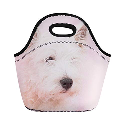 (Semtomn Neoprene Lunch Tote Bag Pink Dog West Highland White Terrier Westie Westy Animal Reusable Cooler Bags Insulated Thermal Picnic Handbag for Travel,School,Outdoors,Work)