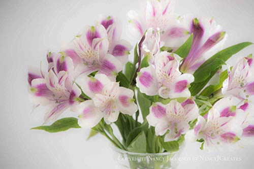 (White and Red-violet Alstroemeria Bouquet Floral Print Unframed Flower Photo Peruvian Lily Photography Botanical Print Dreamy Bedroom Art 5x7 8x10 8x12 11x14 12x18 16x20 16x24 20x30 24x36)