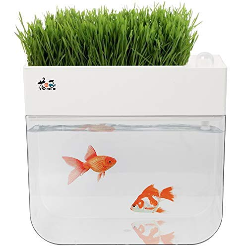 Homend Ecosystem Fish Tank,Fish Tank Grow Plants Seed Sprouter Wheatgrass Sprouts Hydroponic Cleaning Ecosystem Water…