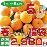 春のかんきつの福袋 訳有り 箱詰め 小玉 中玉 大玉 Sサイズ~Lサイズ 送料無料 (5kg)