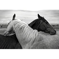 White Horse and Black Horse Art Print on Canvas,Wall Decor Poster 24x36 inches