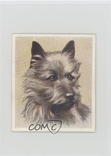 The Cairn Terrier (Trading Card) 1939 Godfrey Phillips Our Dogs - Tobacco [Base] #6 (Card Phillips Tobacco)