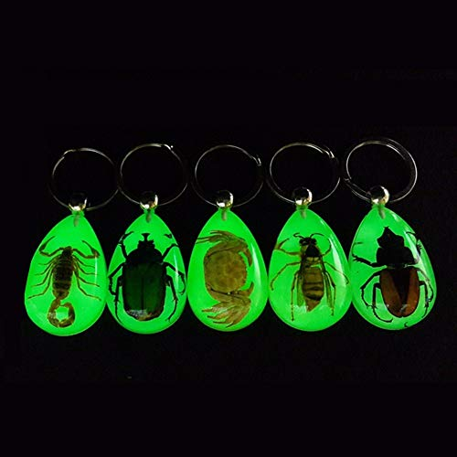 Trend Natural Glow-in-The-Dark Real Insect Keychain Keyring Key Chain Beetle Animal Specimens Collecting Hot (Keychain Specimen Beetle)