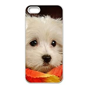 Diy Beautiful Lovely Little Dog Custom Cover Phone Case for iphone 5s White Shell Phone [Pattern-2]