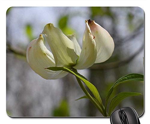 Mouse Pad - Dogwood Flower Flower Blossom Bloom Nature Cream