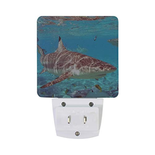 Night Light Shark Shallow Water Led Light Lamp for Hallway, Kitchen, Bathroom, Bedroom, Stairs, DaylightWhite, Bedroom, Compact by OuLian (Image #3)