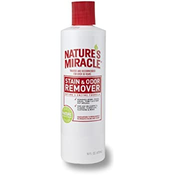 Amazon Com Nature S Miracle Stain And Odor Remover Pet