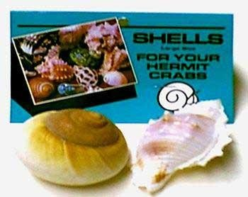 Florida Marine Research Shells for Hermit Crabs - Large - 2 pk ()