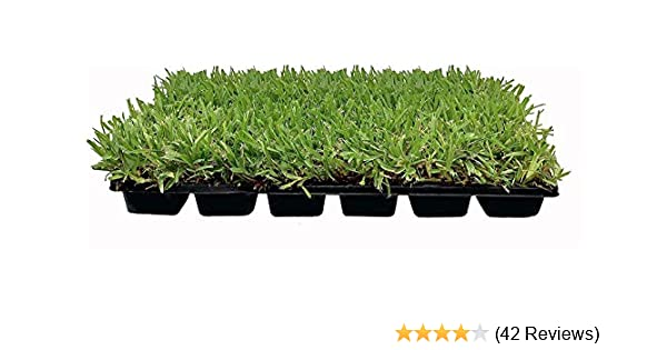 Augustine Sod Plugs Home Outdoors Garden Center Landscaping 36-Count Trays St