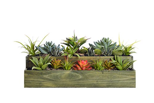 Laura Ashley VHA102441 Succulents with Grass Wooden Pot, 24 by 14 by 9.5