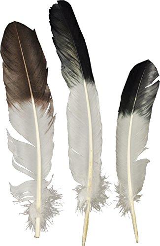 Morris costume EAGLE TIP FEATHER -