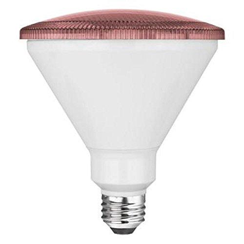 Led Light Bulbs Cancer in US - 4