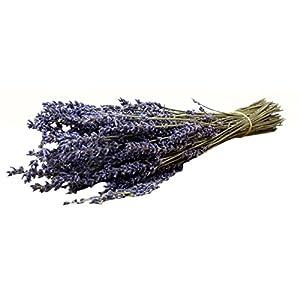 Natural Decor Premium Dried Lavender Bunch in Tissue Paper, 16 Inches 80
