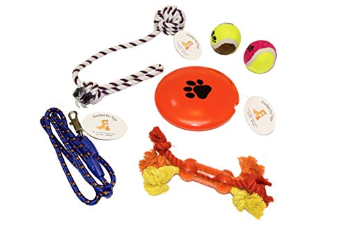 Everlast Pet Toys | Chew & Squeak Toy Bundle for Dogs | 'Paw' Squeaker Disc | Tennis Ball Set | Teether Bone Rope | Leash | Knotted Ball Pull Rope - Ear Warehouse Tag