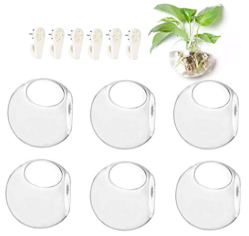 - 6-Pack Wall Hanging Planters Glass Terrariums - Round Air Plants Wall Containers Succulents Globe Orbs (4.7 x 4.7 Inches)