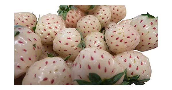 Amazon.com: 150 Semillas color blanco pineapple-strawberry ...
