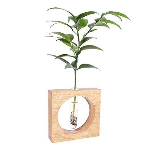 Plant Holder Hanging Planter Container Vase Pot Tabletop Wood Stand with Test Tube Terrarium for Indoor Outdoor Plants House Plants Flower Wall Home Decor (Square) by AIEVE