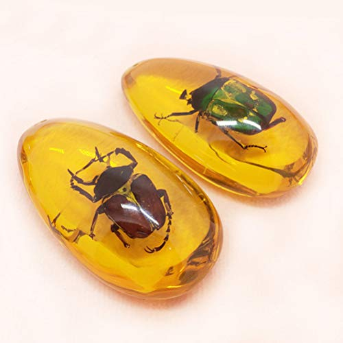Vosarea Natural Insect Specimen Scorpion Crab Butterfly Amber Untreated with Insect Inside for Education Gift 3 Pcs