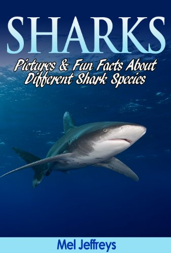 Sharks: Pictures and Fun Facts About Different Shark Species