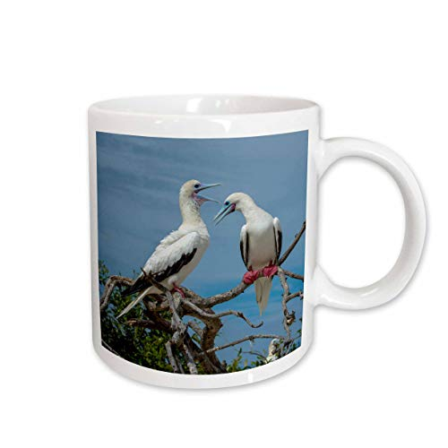 3dRose Danita Delimont - Boobies - Seychelles, Indian Ocean, Cosmoledo Atoll. Pair of Red-footed boobies. - 15oz Two-Tone Yellow Mug (mug_312506_13)